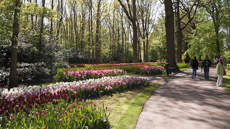 "Keukenhof, known as the world's largest flowergarden, and ""Garden of Europe""."