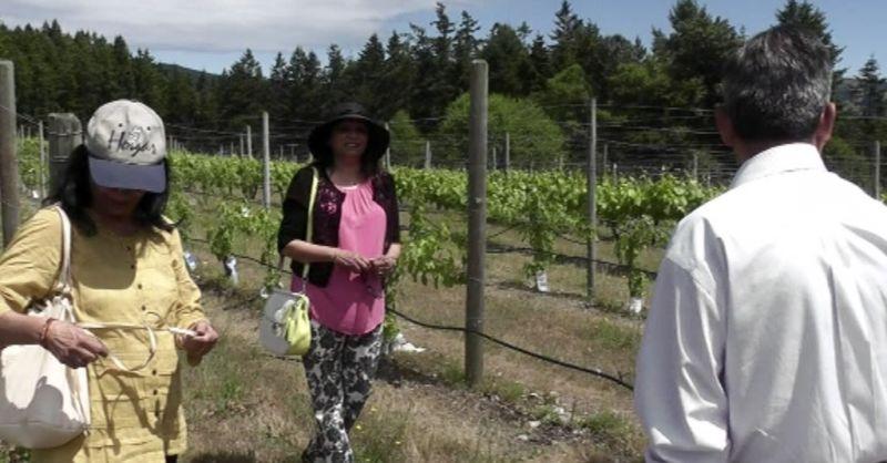 tour vineyard canada