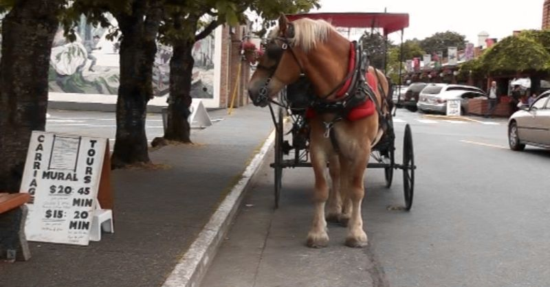 carriage ride in Chemainus, Vancouver Island BC